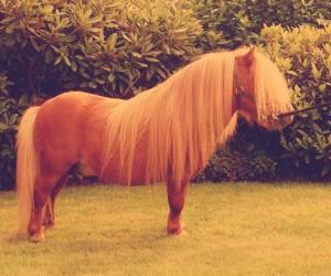 pony2 lordkelvin
