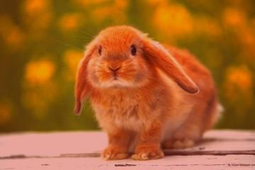 bunny2 love